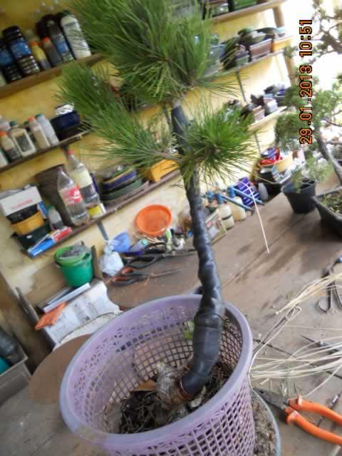 pinheiro1depois