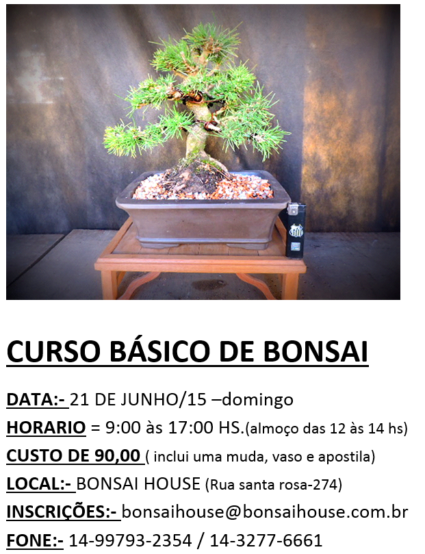carta-bonsai